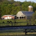 thompsons station farm